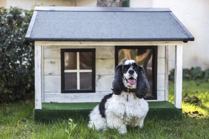 Consejos para pintar la casa de tu perro